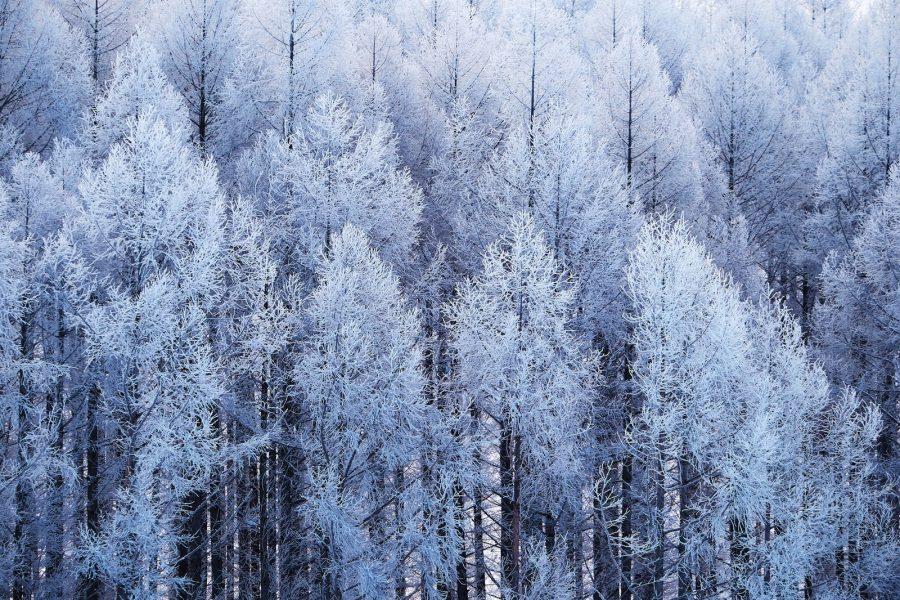 もっさもさ!新潟らしい冬ですね〜!!